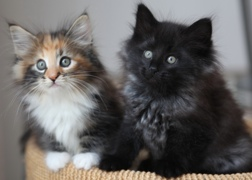 Cute, but potential mice killers.